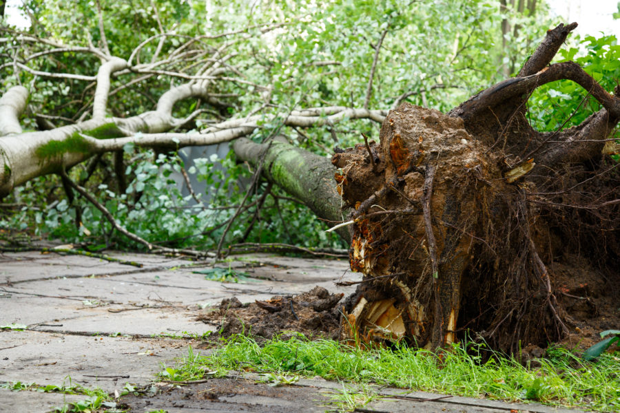 Hurricane Irma Debris Removal Information – Orange County